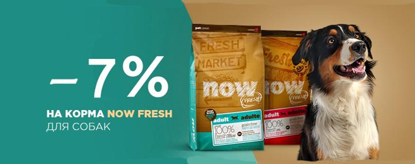 Скидка 7% на корм Now Natural Holistic