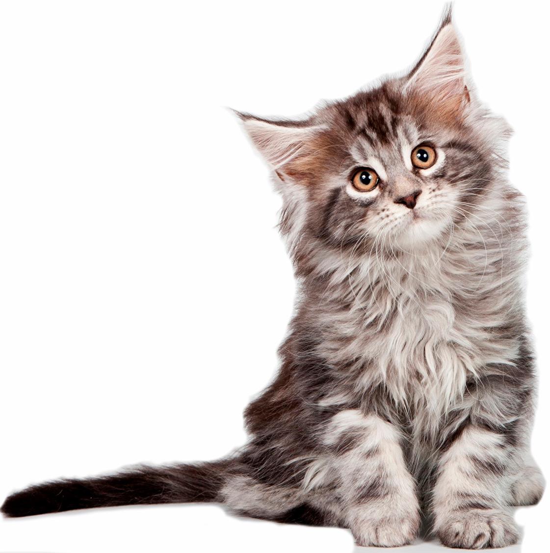 Для котят
